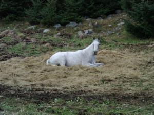 equine pix